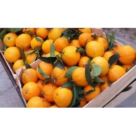 Arancia Pernambucco di Finalborgo (Riviera Ligure di Ponente), 4 kg - Specialità liguri