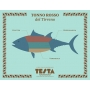 Ventresca di tonno rosso in olio EVO, 320 gr - Testa Conserve - Conserve di mare