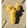 """Sirk"" grape vinegar, 250 ml - Az. Sirk della Subida"