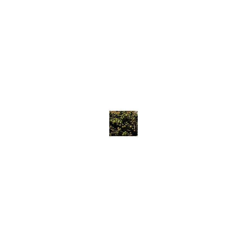 Pepe bianco di Penja, grani - kg. 0,5