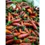 Chili Chipotle rosso Jalapeno, USA, macinato - kg. 0,5