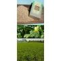 Bean Risina Spello Biologico, 500 gr