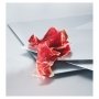 Prosciutto di Spalla di Ghianda 100% Iberica 4,770 kg - Paleta de Bellota Intera con osso