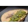 Pesto di pistacchio di Bronte, 190 gr - Aricchigia