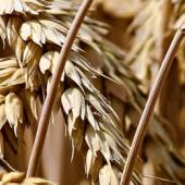 Pasta biologica, nutri il tuo benessere